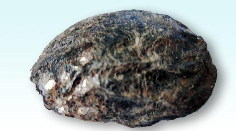 O fenômeno das Pedras Parideiras