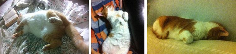 gatos relax